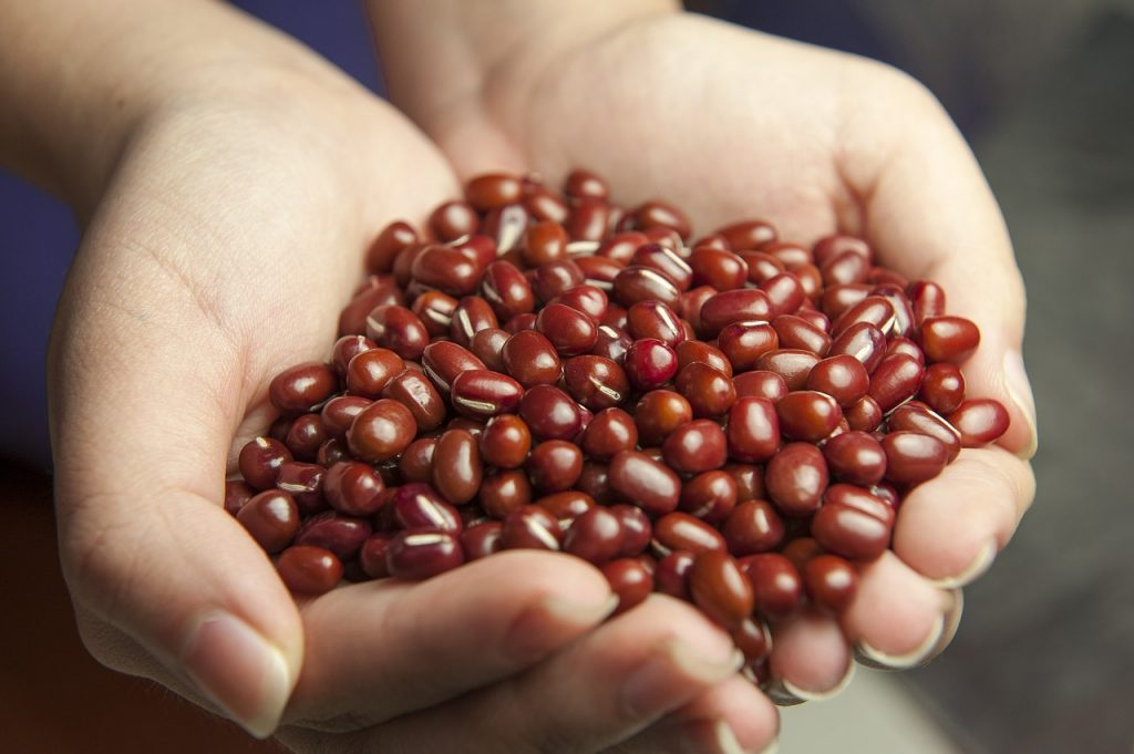 best food to lose weight is beans