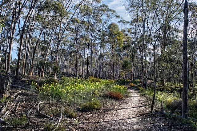 Munda Biddi Trail, Australia - off road trails