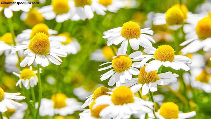 Plants Benefits