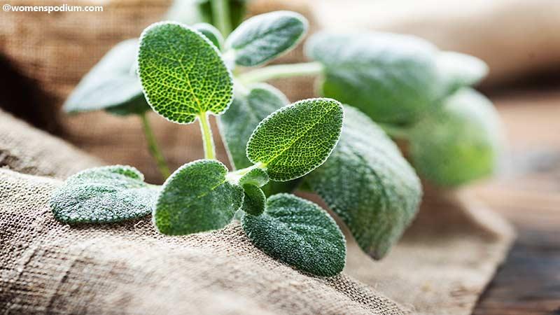 Plant Based Remedies