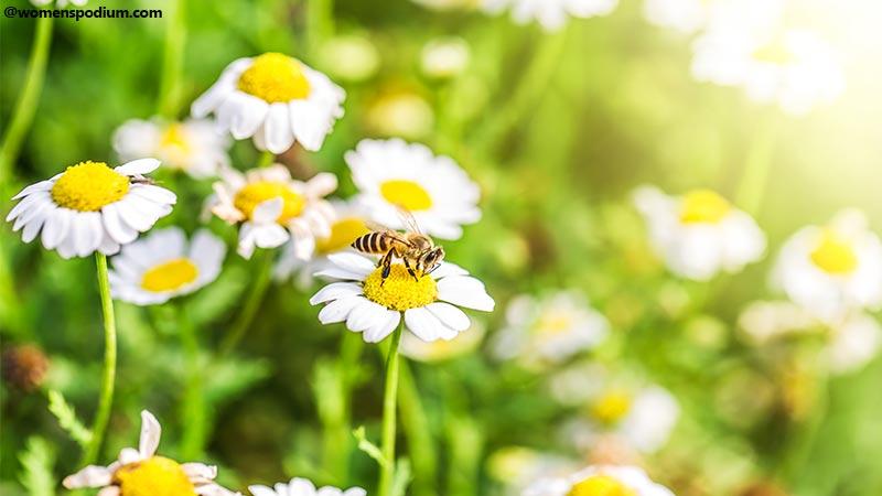 Benefits of Natural Remedies