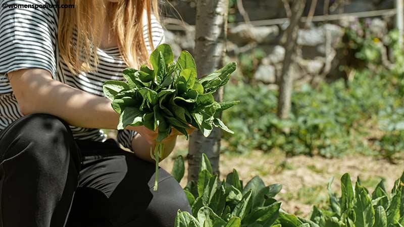 Plantation of Herbs