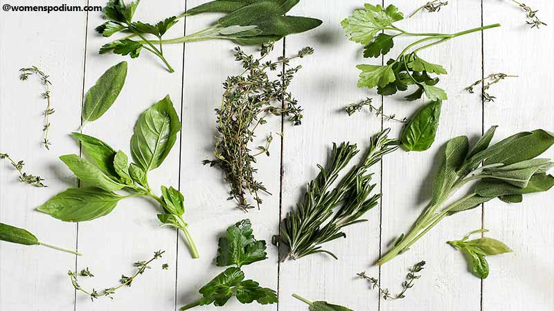 kinds of Herbs
