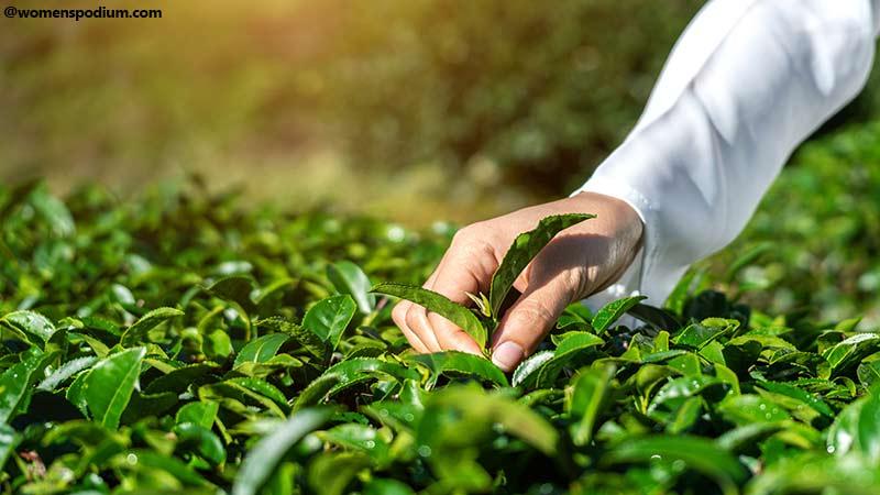 A Checklist for Herbs